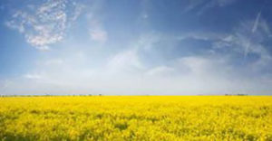 Bio Fuels Industry - Northvale Korting